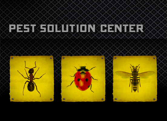 black flag insect and pest control black flag