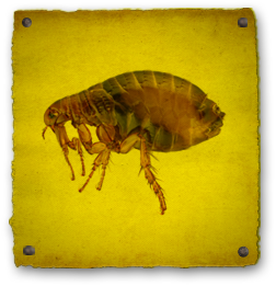 Rid Fleas From Carpets And Floors