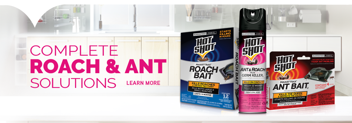 Roach And Ant Solutions