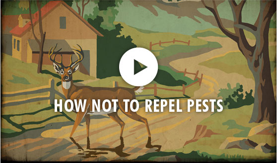 How Not To Repel Pests