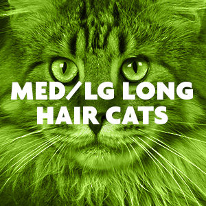 Medium Large Long Hair Cats