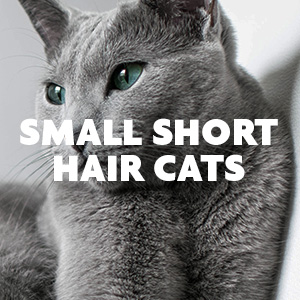 Small Short Hair Cats