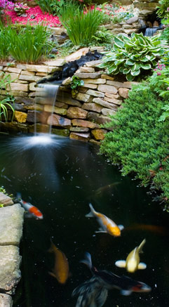 Tetra Pond offers expert solutions for many common pond problems.