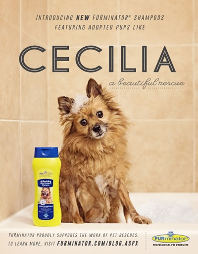 Cecilia Beautiful Rescue Furminator Poster