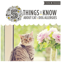 5 Things to Know About Cat and Dog Allergies