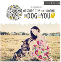 3 Tips for Choosing the Dog for You
