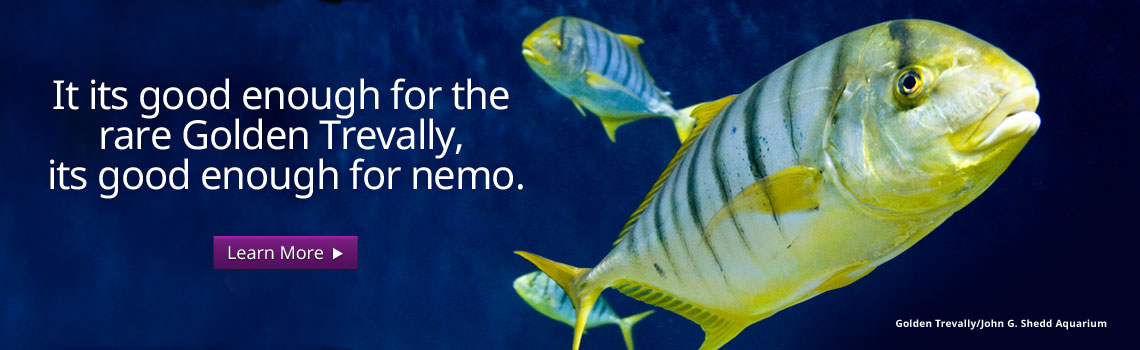 It is good enough for the rare Golden Trevally, its good enough for nemo.