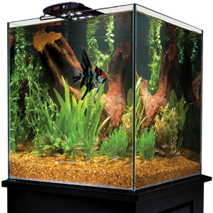Shop our LED aquarium lighting systems at Marineland.