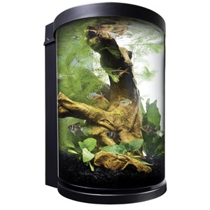 Our fish aquarium kits are a great option for any starter aquarium.