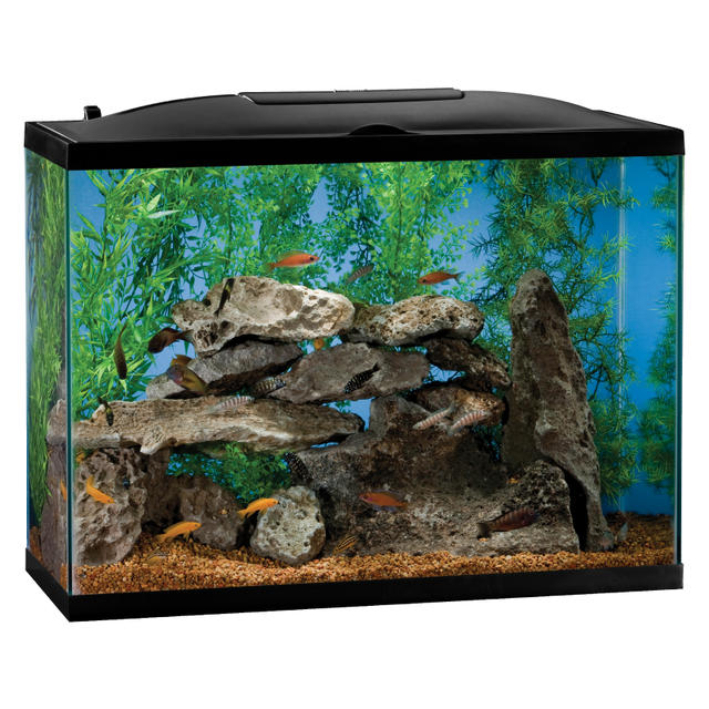 Image gallery marineland aquarium for 10 fish in a tank riddle
