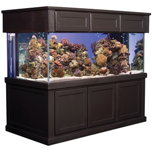 Deep Dimension Corner-Flo Aquariums