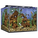 Frameless Cube Glass Aquariums