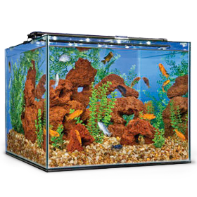 Shop and buy from our extensive line of glass aquariums and tanks.