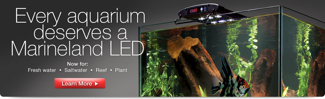 Every aquarium deserves a Marineland LED light