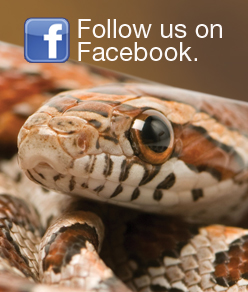 Tetrafauna on Facebook