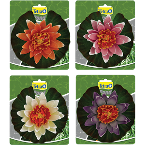 Decorative Water Lilies