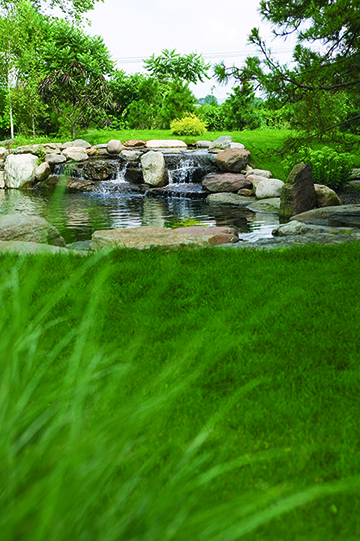 What S Wrong With My Garden Pond Water: Five Environmental Benefits Of A Pond