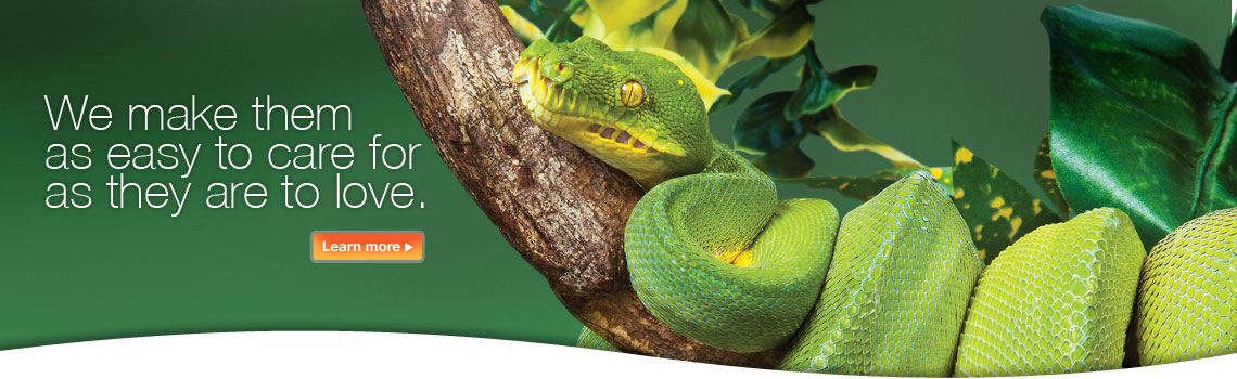 Tetrafauna - We reptiles as easy to care for as they are to love.