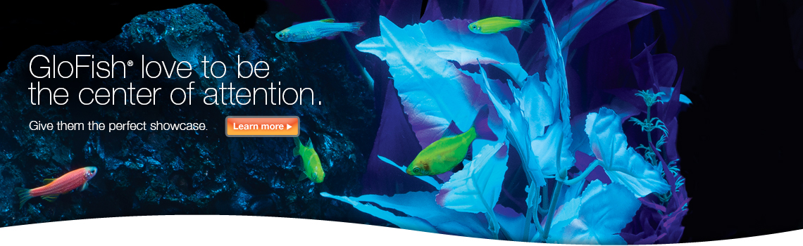 GloFish Attention