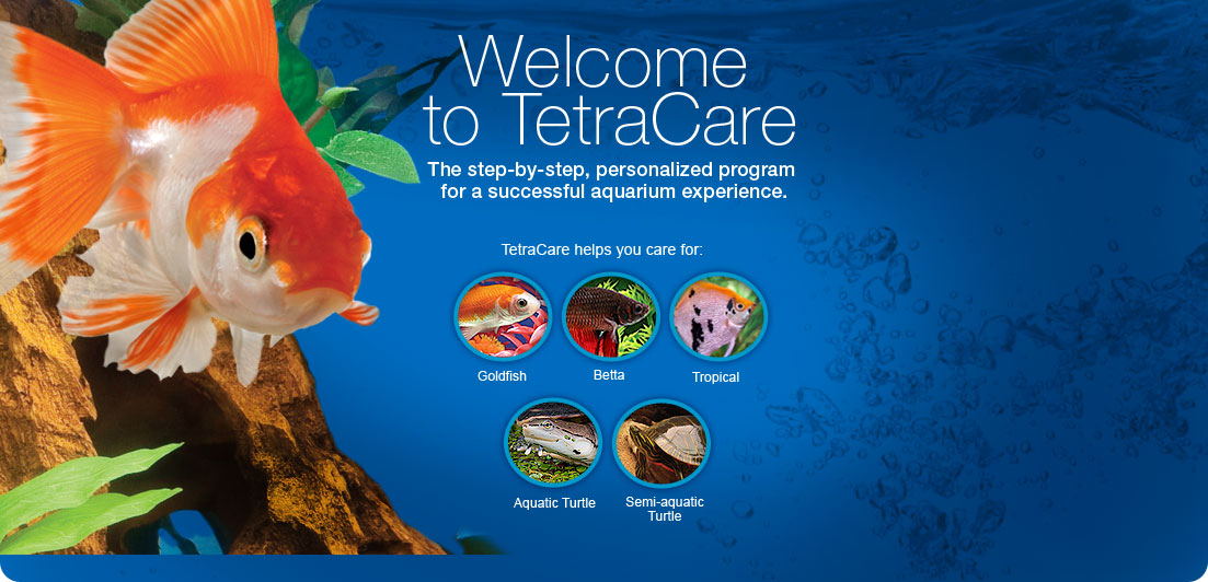 Welcome to TetraCare. The step-by-step program for the successful aquarium experience.