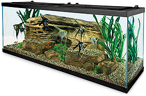Aquarium Set Up Step By Step Shop Pets Online Only At