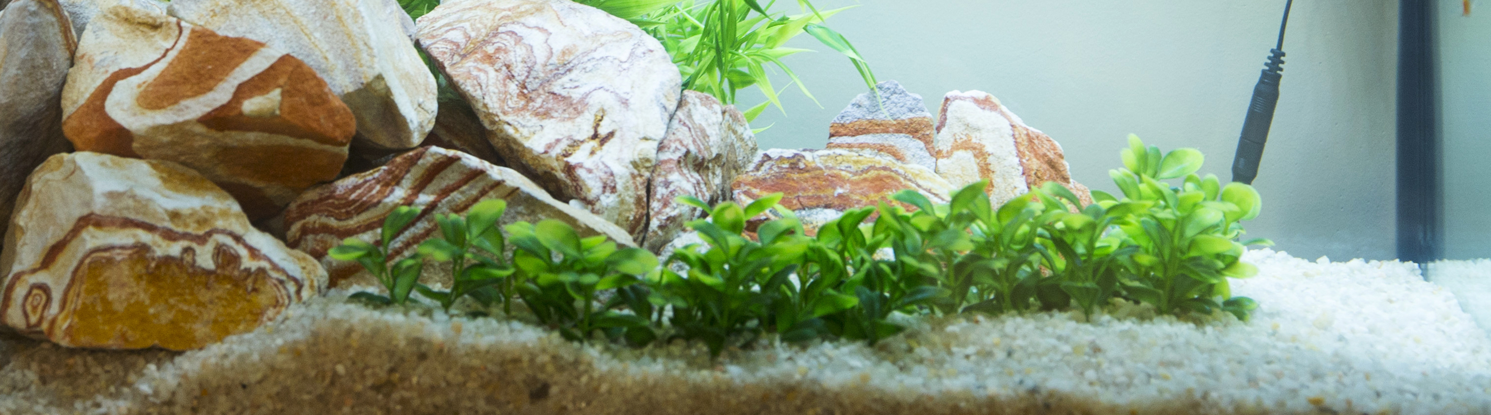 Freshwater aquarium fish high ph - Fish Waste And Other Decomposing Material Will Produce Ammonia In High Quantities This Chemical Will Kill Animals In An Aquarium